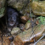 Restoring Ratty- bringing the water vole back to Kielder!